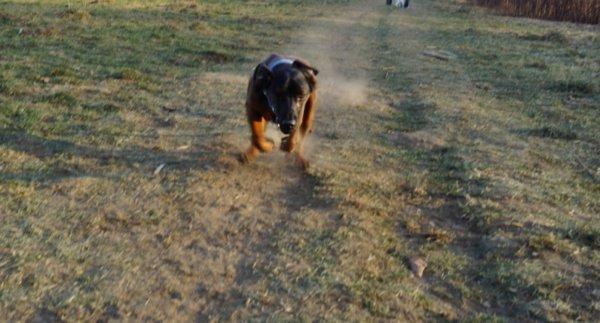 Candy im Tiefflug!! Auch heute rennt sie immer noch sehr gerne ich denke manchmal 'gleich hebt sie ab!'.