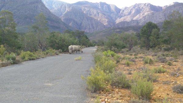 Südafrika#2_Rhinos_BSL