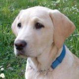 Profilbild von labradorfreundin