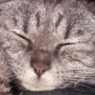 Profilbild von Klemens